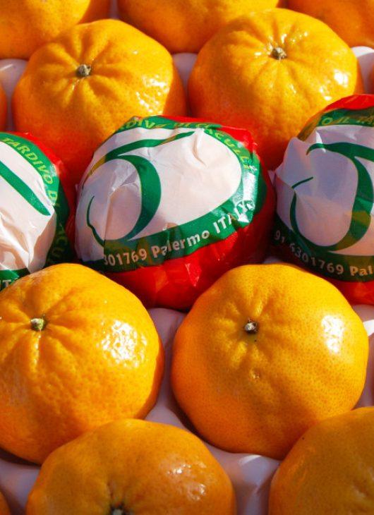 Consorzio Mandarino Tardivo di Ciaculli (2)